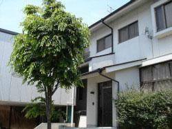 上原塾 けやきの木がシンボル  仏生山郵便局の西隣です駐車場もあります