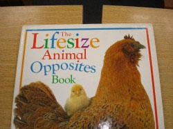 B教室 小学生英語教材  Lifesize(実物大)の動物絵本です