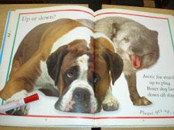 B教室 小学生英語教材 いぬ  Lifesize(実物大)の動物絵本です