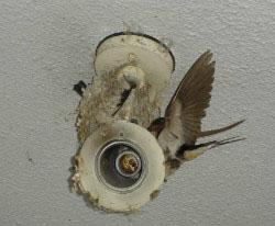 塾入り口照明 つばめの巣  巣が熱くならないよう電球をとってあります